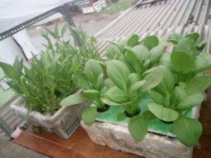 Hidroponik Urban Farming Masa Kini Ruangrakyat Com